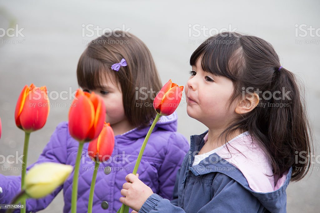 Sisters stopping to smell spring tulips royalty-free stock photo