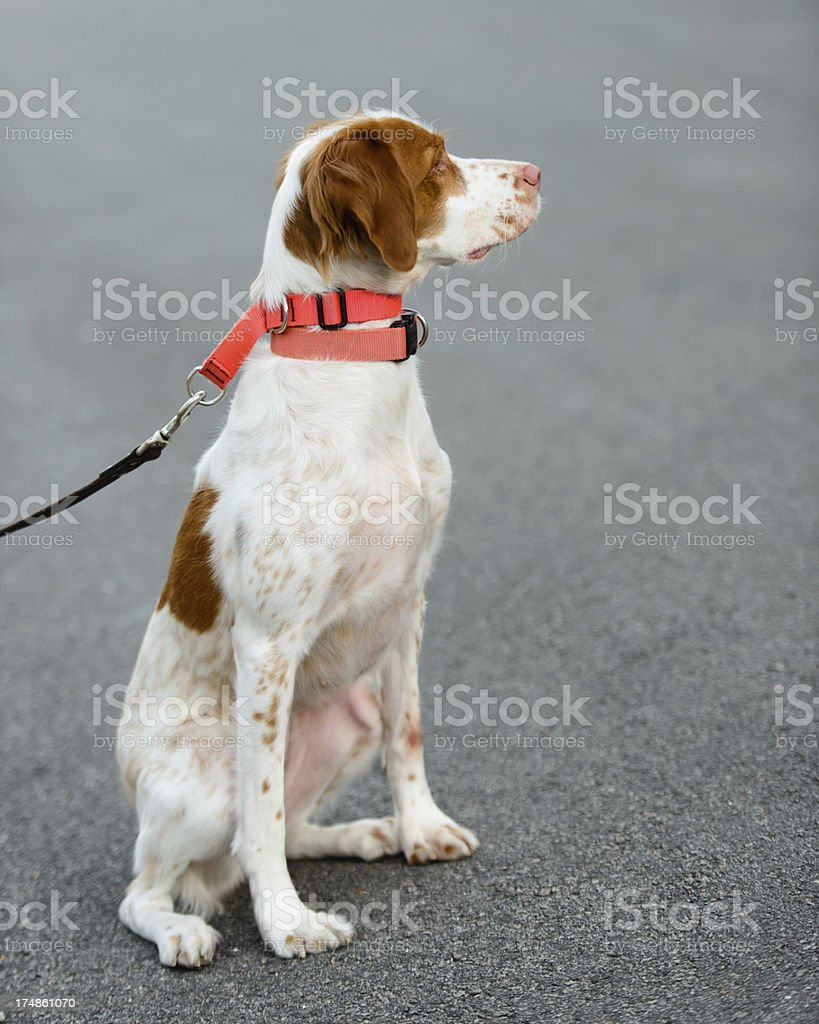 Sit, Stay royalty-free stock photo