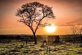 Sunset at Bataguassu, Mato Grosso do Sul, MS, Brazil.