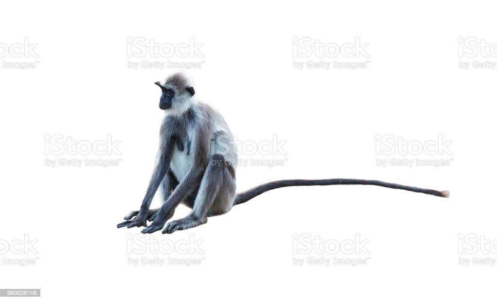 Sitting adult female monkey stock photo