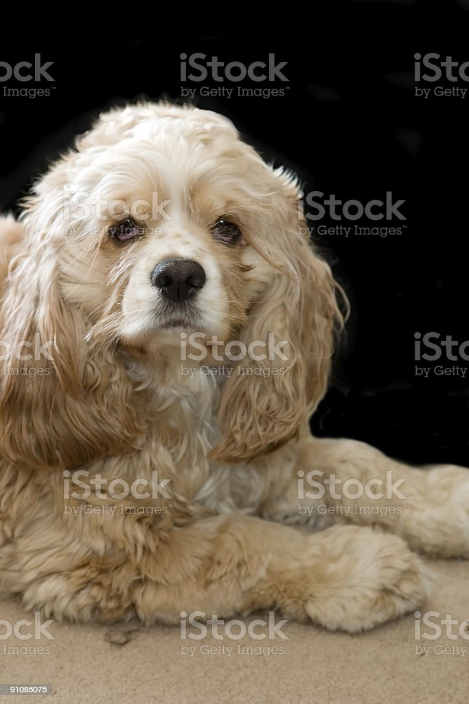Sitting and looking cute stock photo