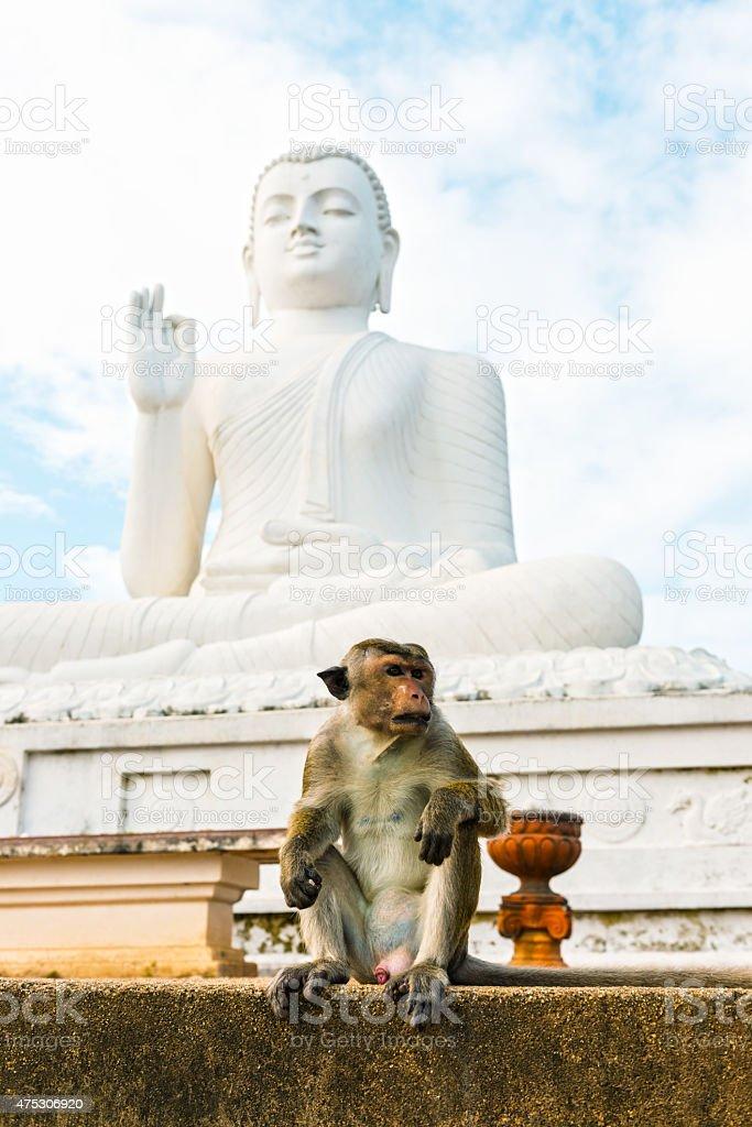 Salon Bouddha au Mihintale  - Photo