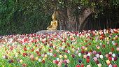 Sitting Buddha Statue in a wunderful tulip field