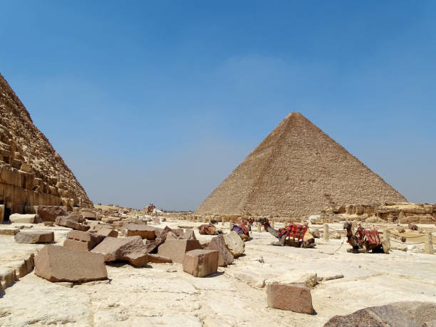 Sitting camels next to the pyramids stock photo