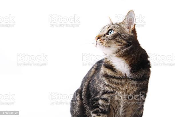 Sitting cat in profile picture id176028173?b=1&k=6&m=176028173&s=612x612&h=5gnwvcga99rxyoyuqb5xoe23xqwwnplyxzdlreex7ok=