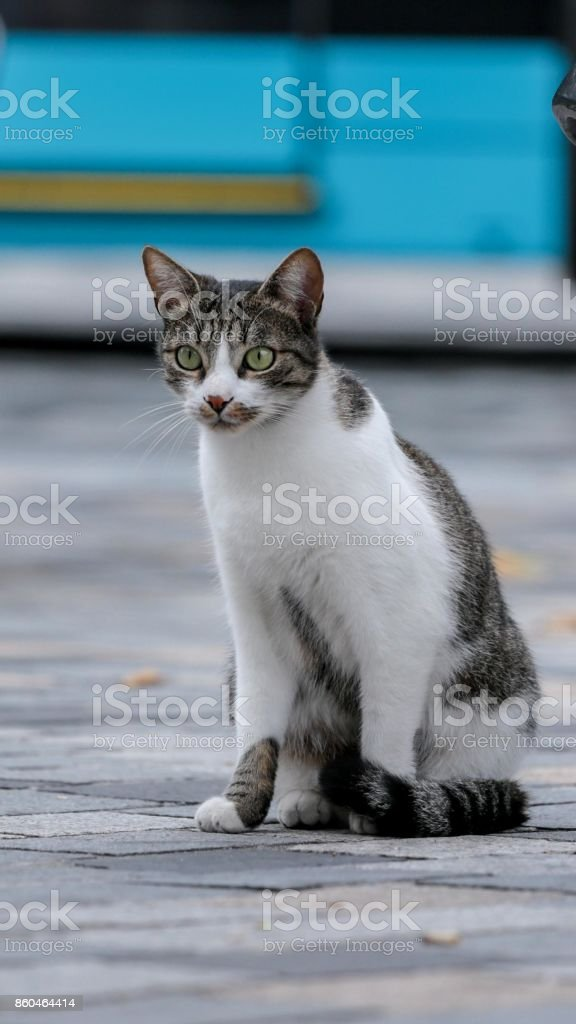 chat assis - Photo