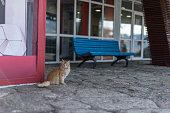 a brown cat sitting near a blur bench