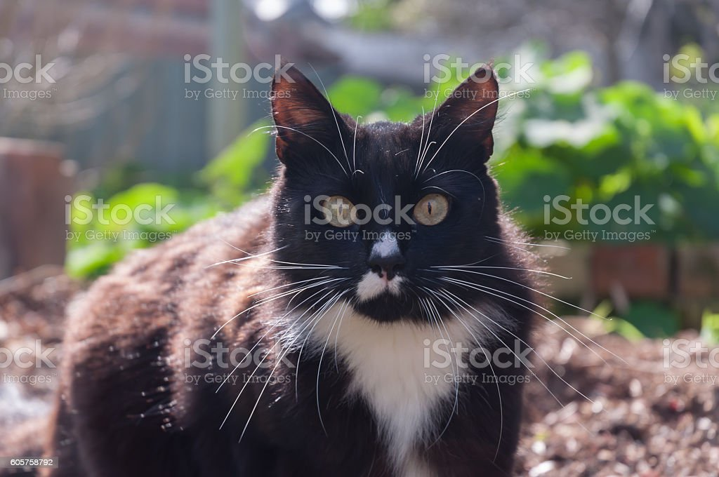 Sitting Kitty stock photo