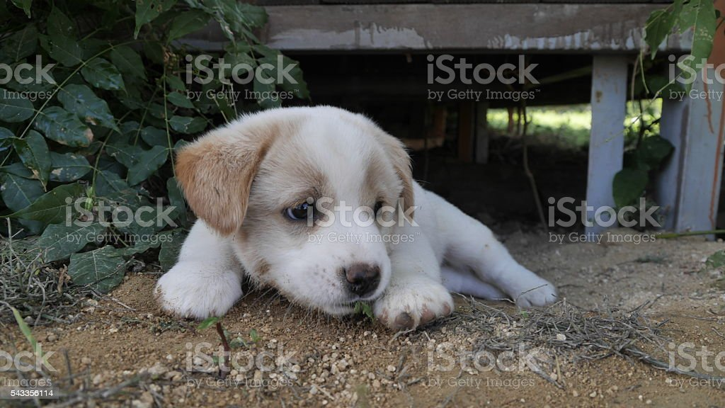sitting looking  to puppy stock photo
