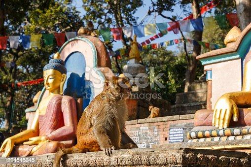 A sitting monkey near the statues of Buddha. Swayambhunath Temple, Kathmandu, Nepal.