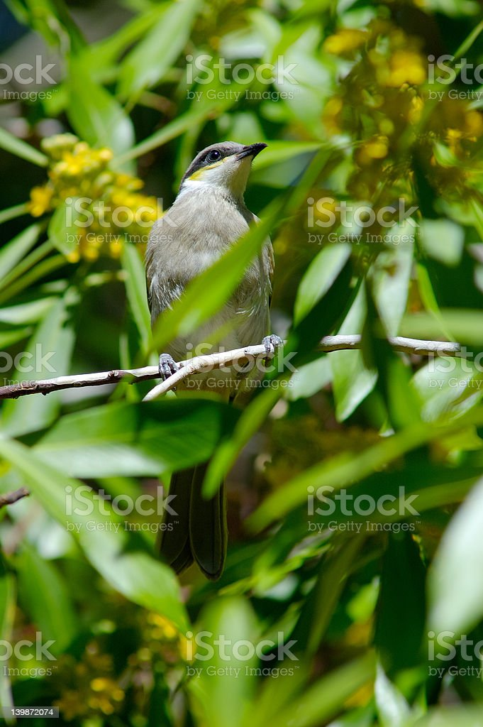 Sitting on a branch royalty-free stock photo