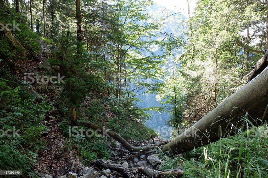 Sitting on a mountain stream stock photo