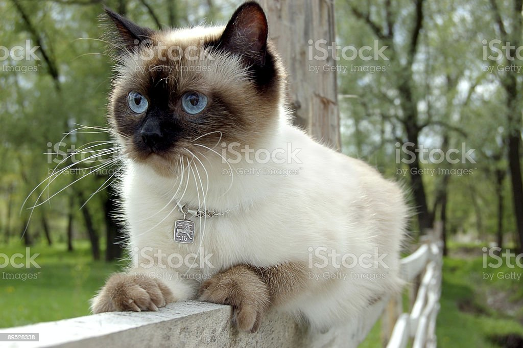 Sitting on fence stock photo