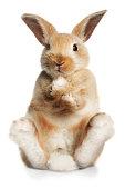 http://www.imaj.ie/is2/animals.jpg