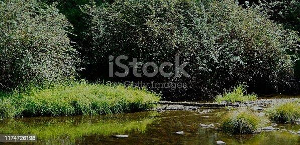 Western Oregon's Coast Range. Siuslaw National Forest. Siuslaw River.