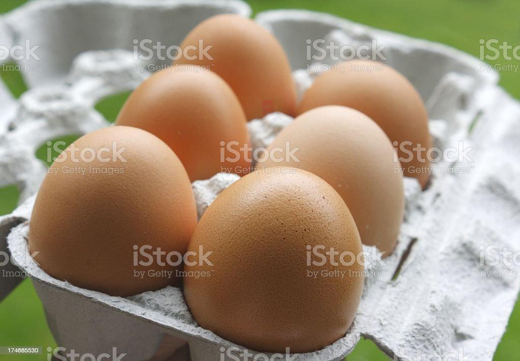 six bio eggs royalty-free stock photo