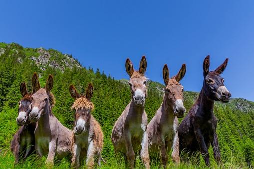 Six curious funny donkeys
