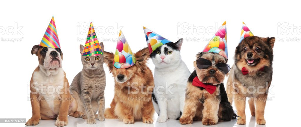 Six Cute Dogs And Cats Wearing Birthday Hats Royalty Free Stock Photo
