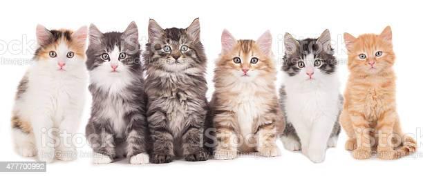 Six cute kitten in a row picture id477700992?b=1&k=6&m=477700992&s=612x612&h=kpmxroj6dodfvxzw4r1bntp vgqxnhstug2nuho9yvq=