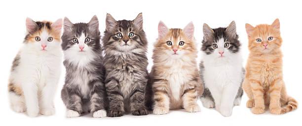 Six cute kitten in a row picture id477700992?b=1&k=6&m=477700992&s=612x612&w=0&h=xccodo bem9jirlln7dmrbelx3pjdcmbpblt5rvrmnc=