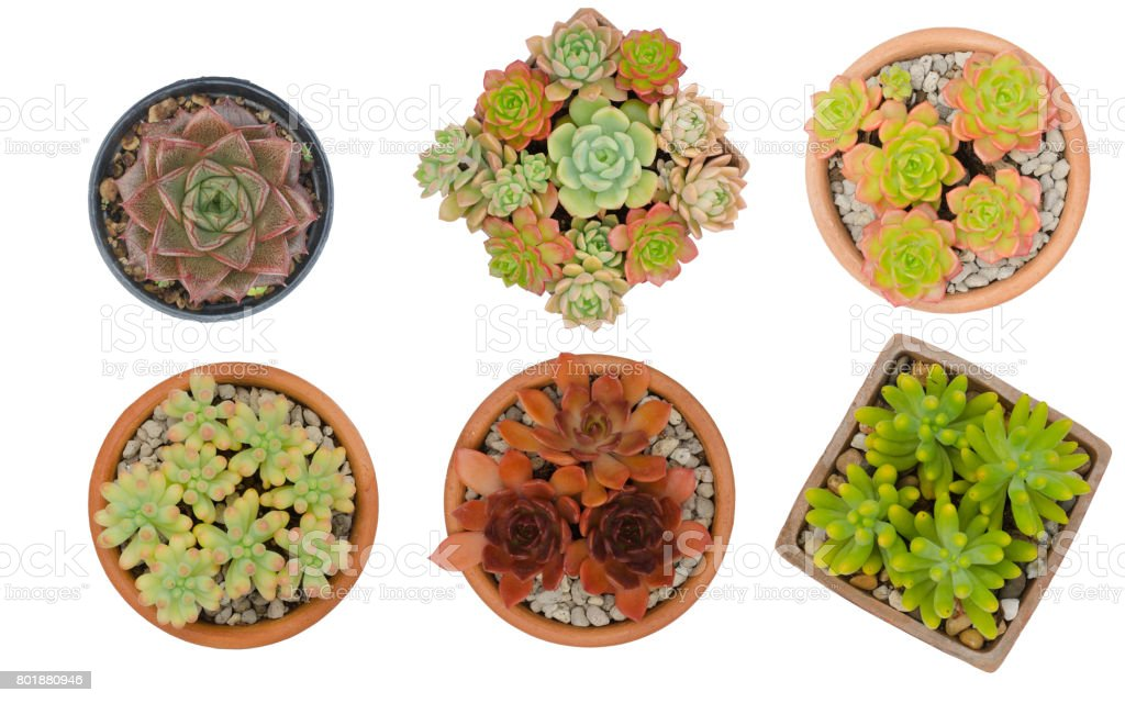 six different cactus in pots isolated on white background stock photo