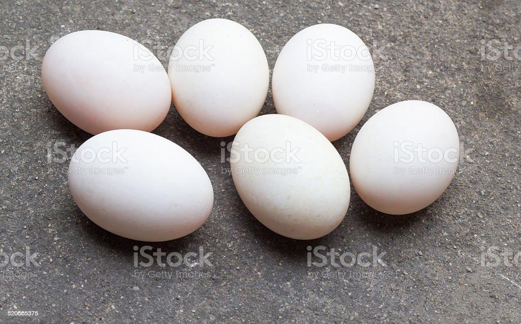 Six duck eggs stock photo