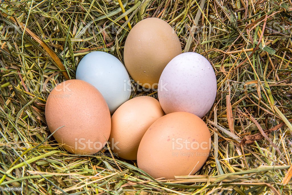 six eggs in different colors and sizes stock photo
