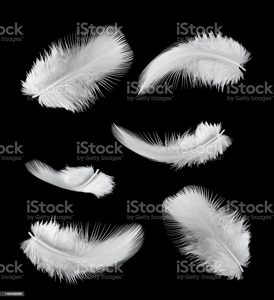 six feathers stock photo