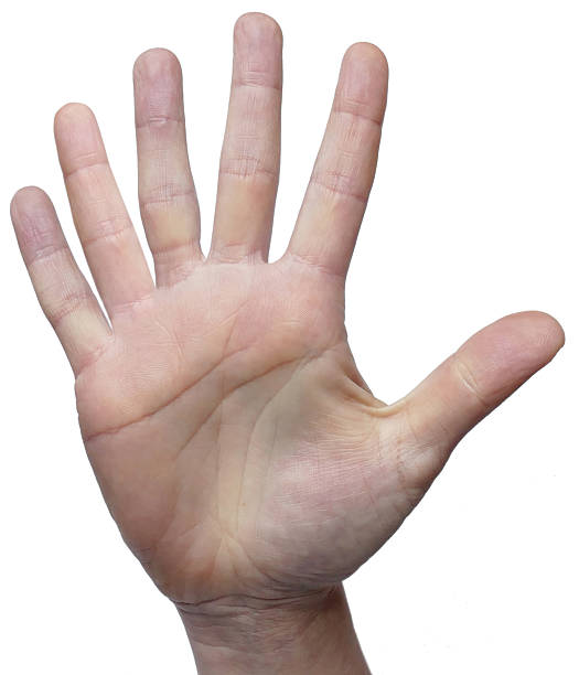 six fingers 6 fingers on 1 hand - number 6 stock photos and pictures