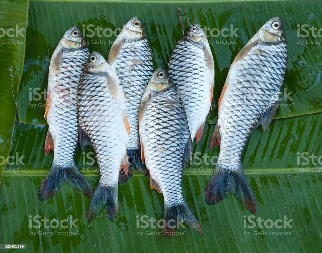 Six fresh river fishs stock photo