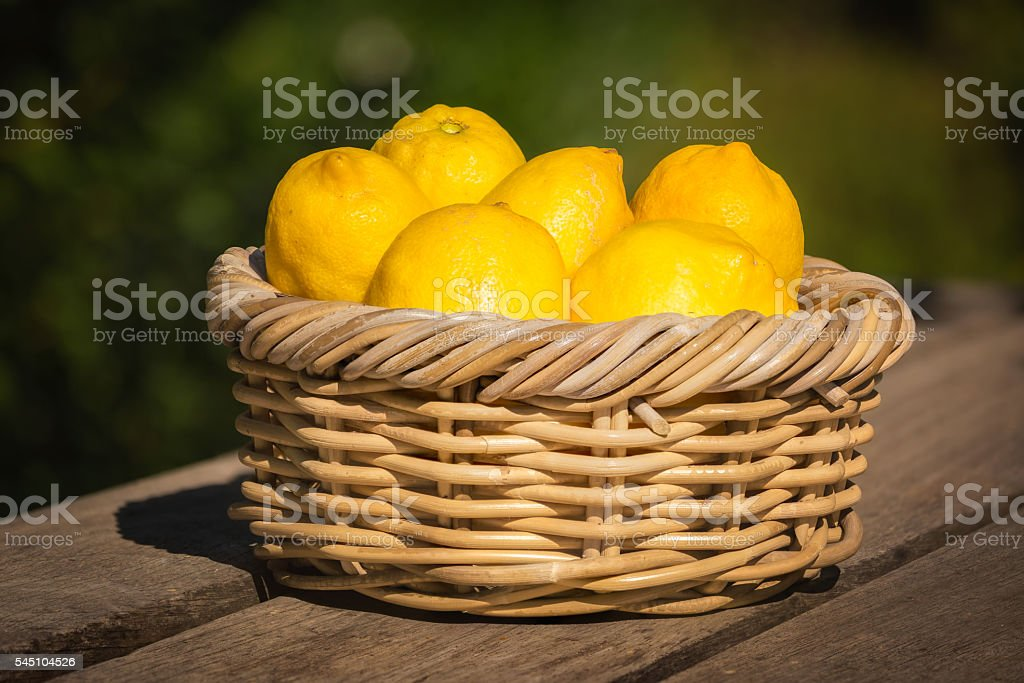Six freshly picked Corsican lemons in wicker basket stock photo