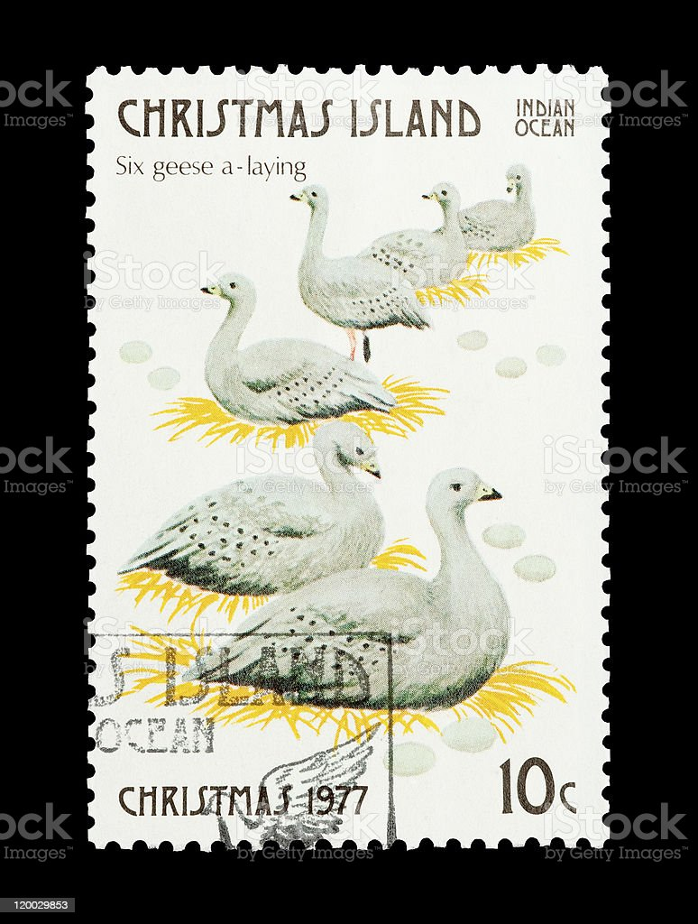 six geese laying stock photo