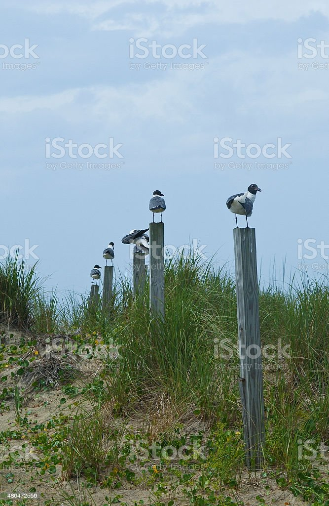 Six Gulls Awaiting stock photo