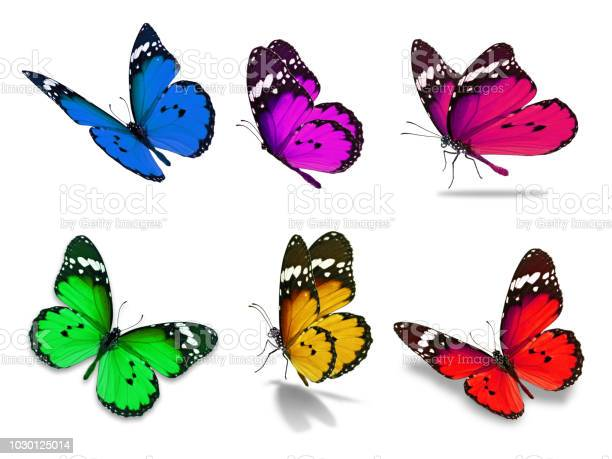 Six monarch butterfly picture id1030125014?b=1&k=6&m=1030125014&s=612x612&h=6hjn0fyrxe danvn57iphh2jj6g7 mbpsyqtp9xmiq4=