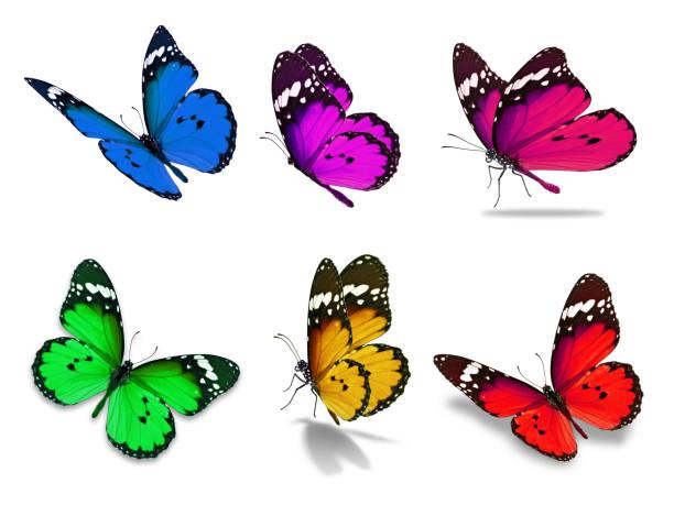 papillon monarque six - papillon photos et images de collection