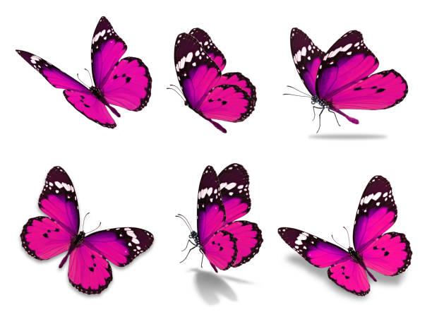 Six monarch butterfly picture id649245050?b=1&k=6&m=649245050&s=612x612&w=0&h=aqzhc 0gqd8rw0ewjbkt0rxp8diilnmqwsmvjk8bd a=