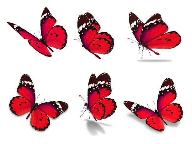 Six monarch butterfly picture id680833686?b=1&k=6&m=680833686&s=612x612&w=0&h=qh69jjny9yqnpdfwfb3bl9iwr0pm1btwwvml sf6f m=