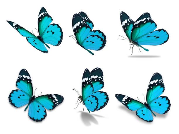 Six monarch butterfly picture id680833774?b=1&k=6&m=680833774&s=612x612&w=0&h=ayv21kqbjkaaelsixbqw3xcq7nddcrqhwxgx304dz a=