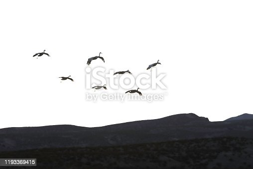 Bosque Del apache National Wildlife Refuge is home to