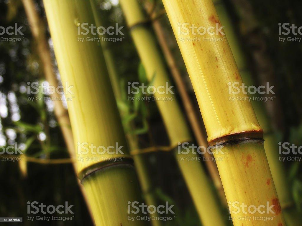 Six Stalks of Bamboo royalty-free stock photo