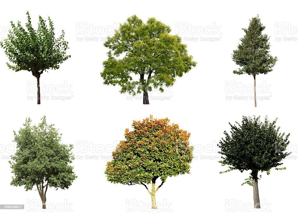 six trees isolated on white background stock photo