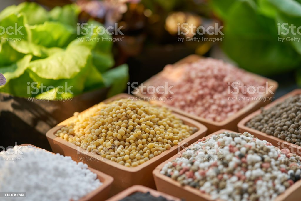 Six types of chemical fertilizers in clay pots and salad leaves stock photo