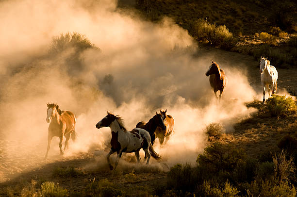 Six Wild Horses running across desert-kicking up dust stock photo