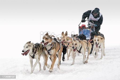 Dog sledding competition.