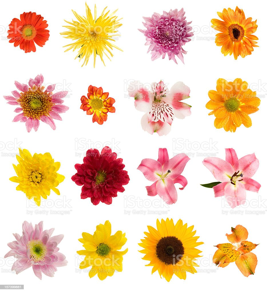 Sixteen different flowers royalty-free stock photo