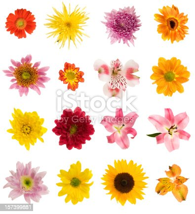 Beautiful flowers of many colors and different varieties