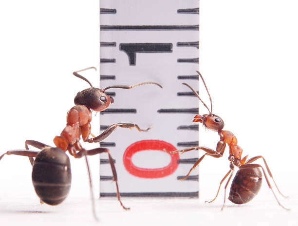 Die Größe zählt, Ameisen und Zentimeter – Foto