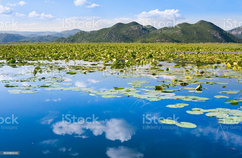 Skadar Lake National Park, Montenegro stock photo