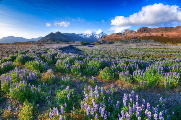 Skaftafell National Park stock photo