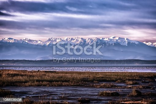 The Fir Island Farms Snow Goose Reserve attracts thousands of snow geese from October until April.  Located in Washington State